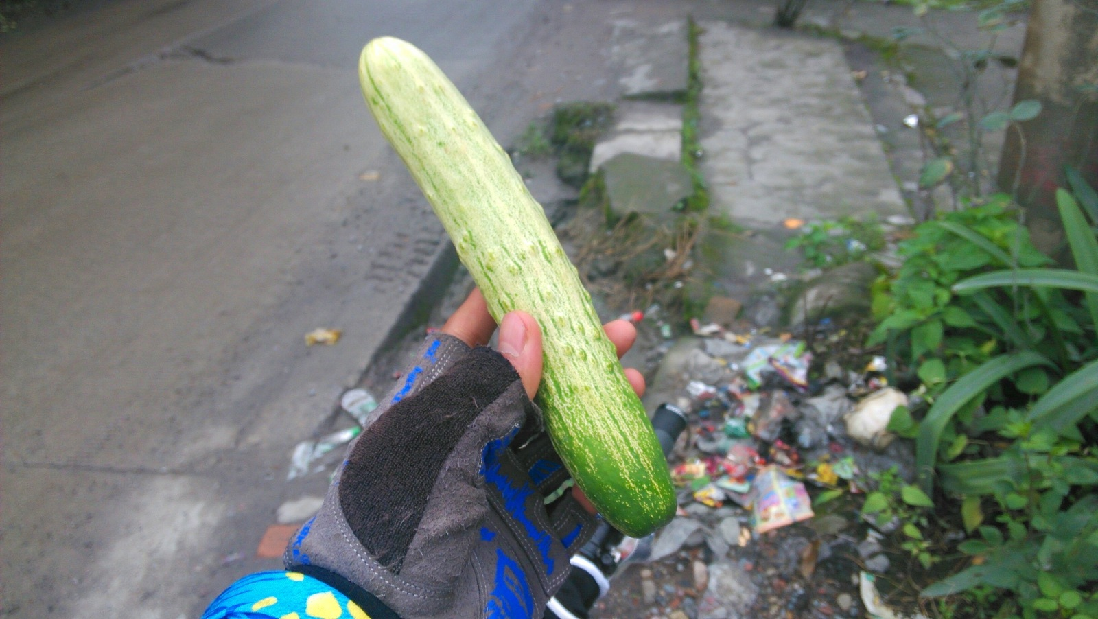 其实这是最后一根黄瓜了