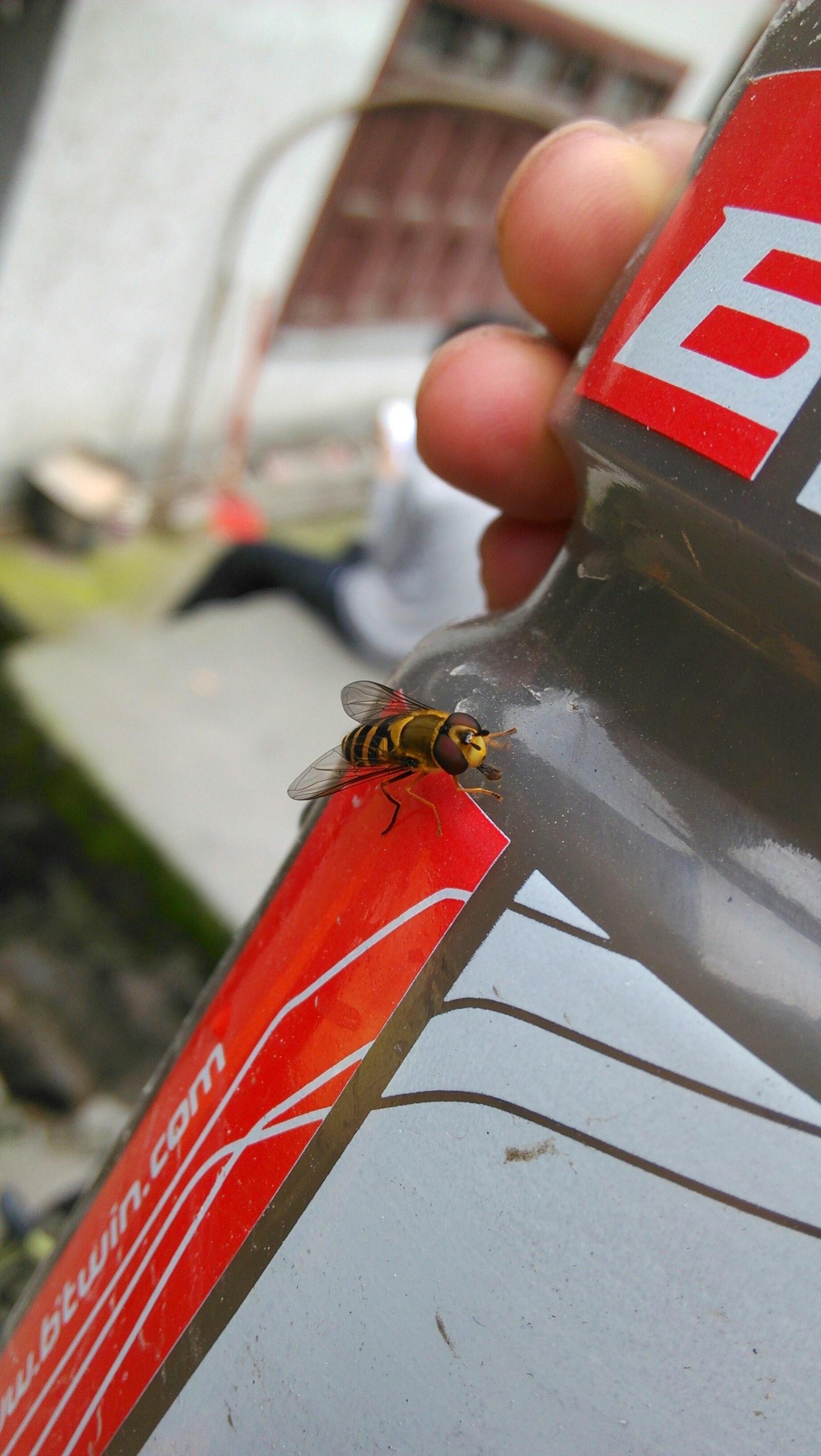穿有金黄色铠甲的苍蝇:-)