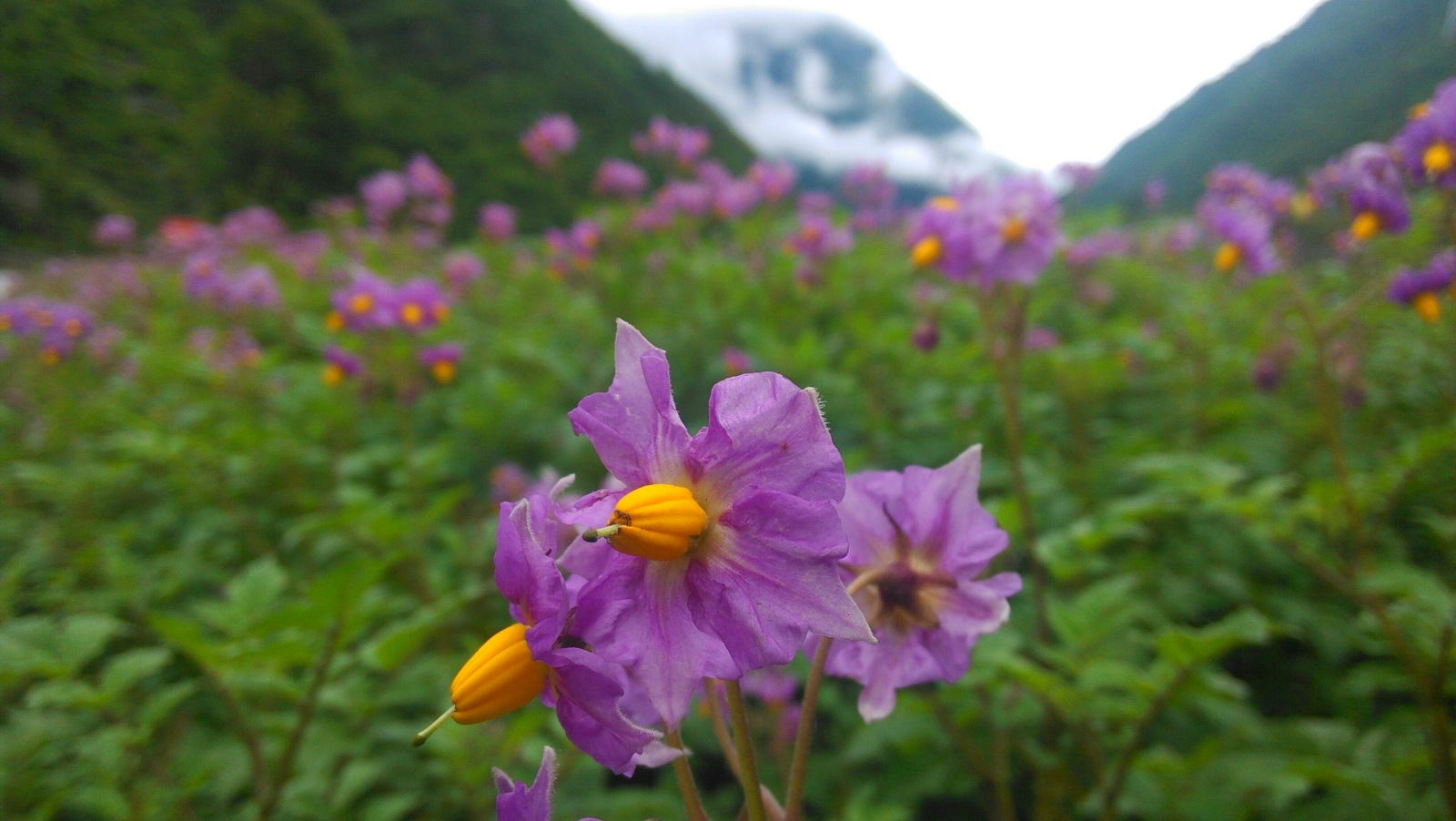 生长在这样一片美丽的土地,作为花儿也是很幸福的一件事情哈