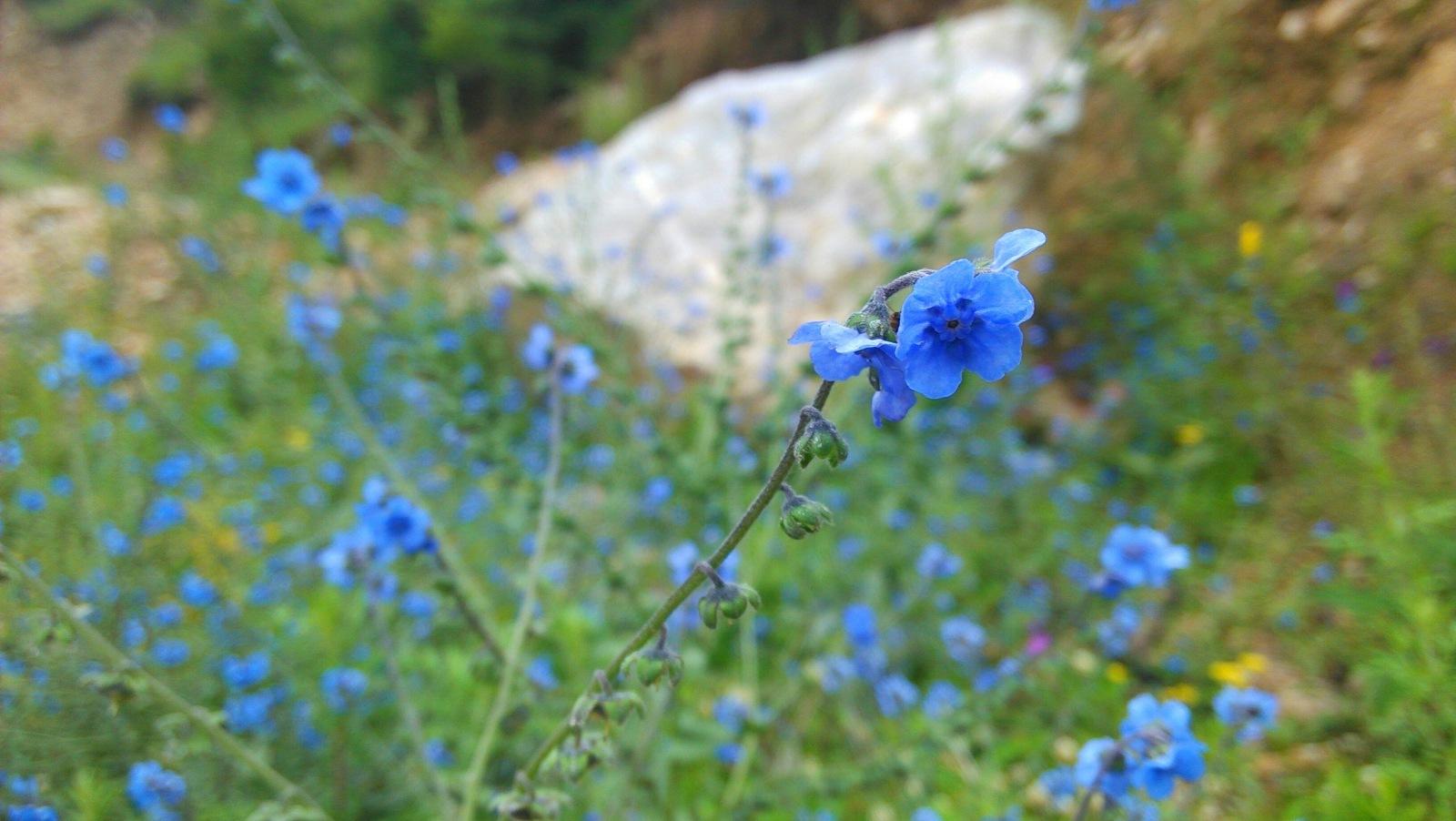 美丽的花儿,蓝色的,我喜欢