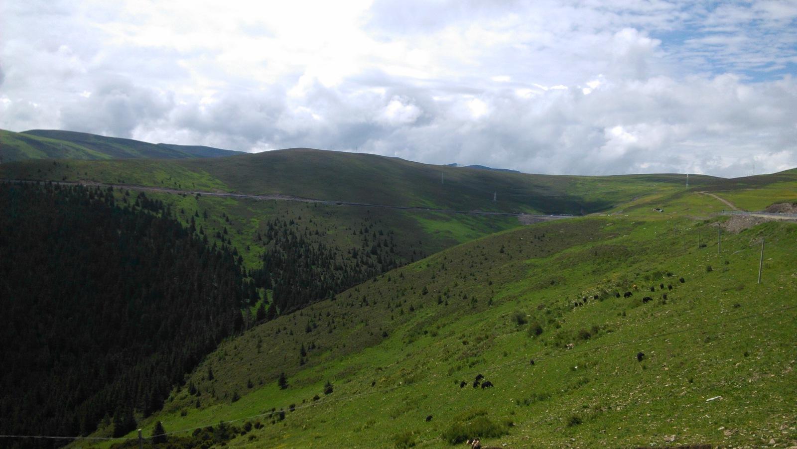 山谷还是有些高点的植被哈