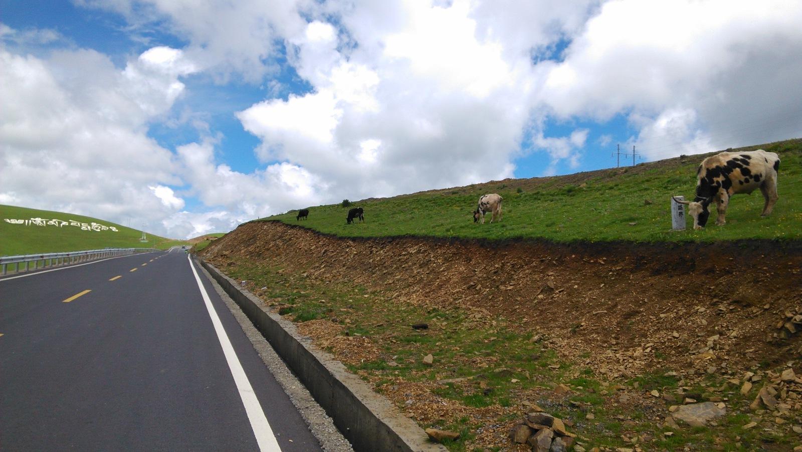 牛儿们都面朝六字真言,祈祷?或许就是在吃草:D