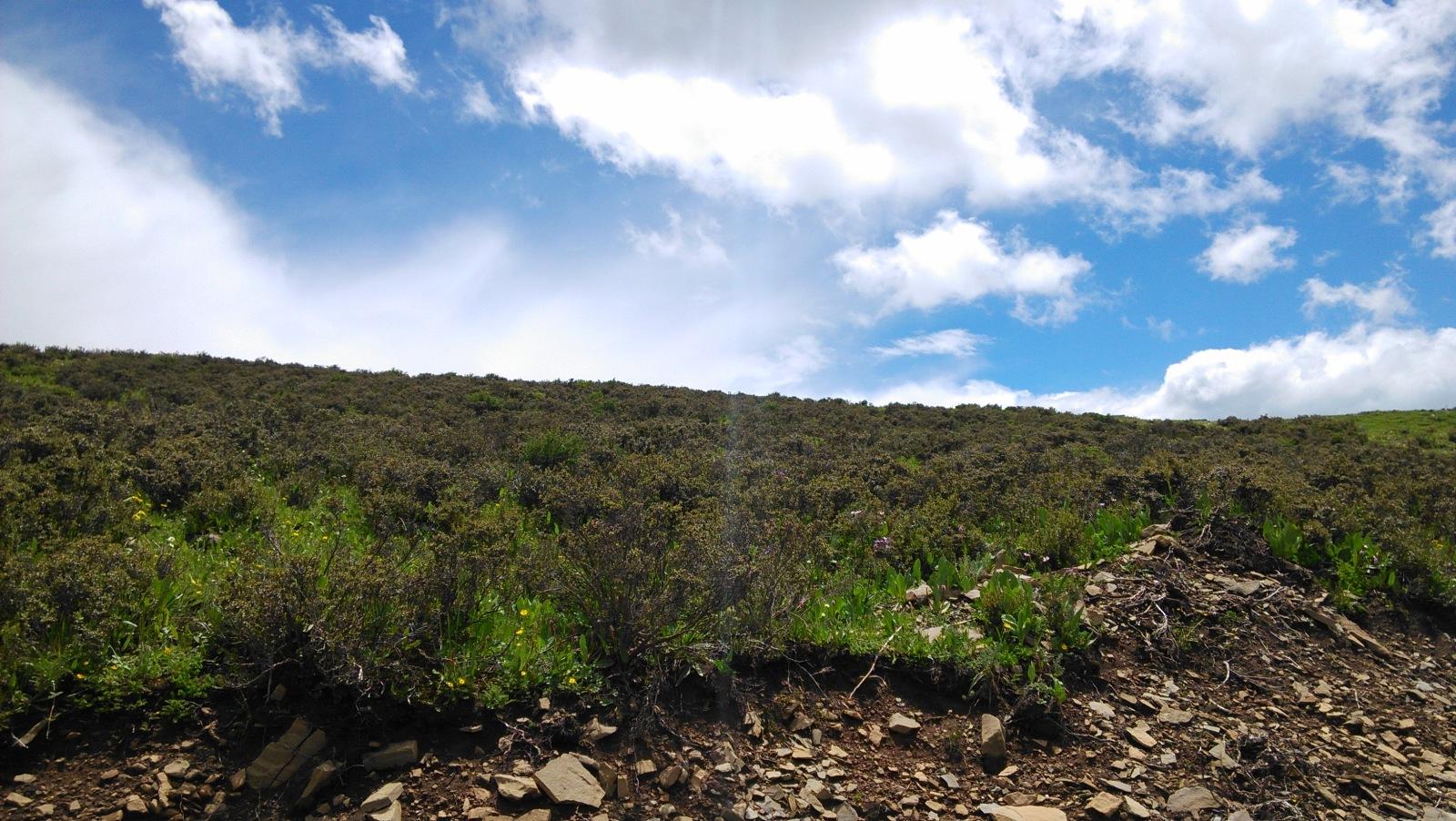 大都是半米高的植被,缠绵一大片就显得很壮观