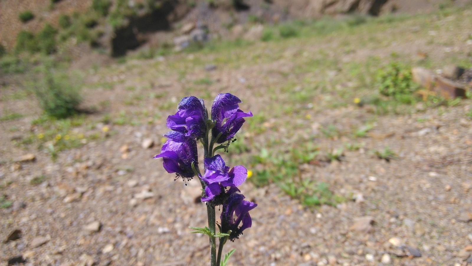 一朵紫色的花,独尊一地,颇显高贵