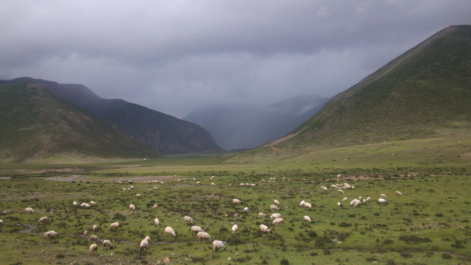 安久拉山顶的羊群