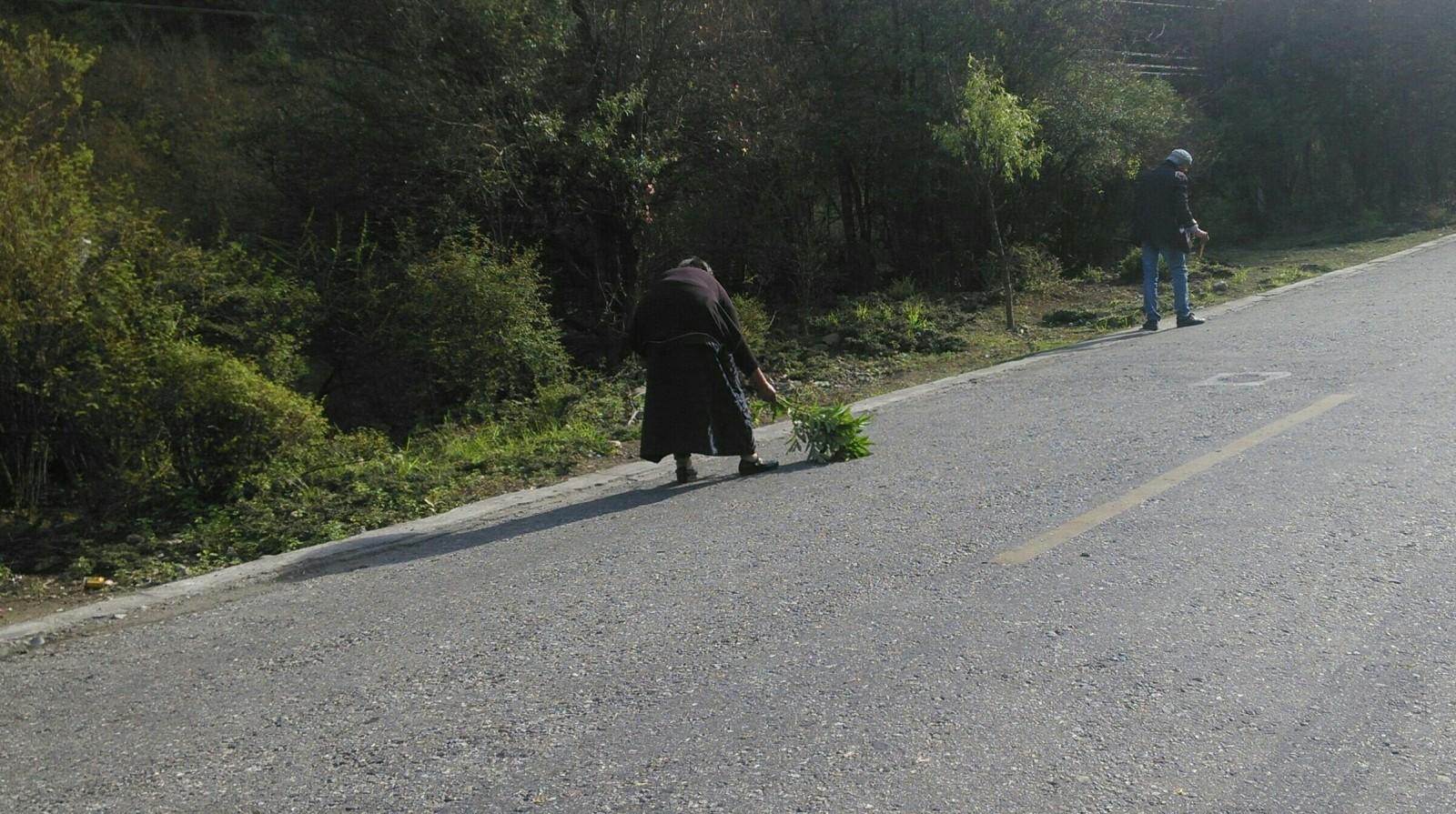 一位藏族老奶奶在用树枝扫虫子,免得他们被车碾死