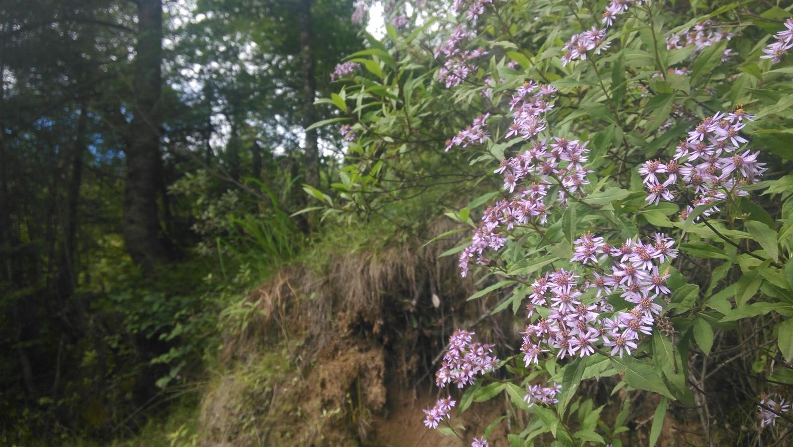 紫色的花儿