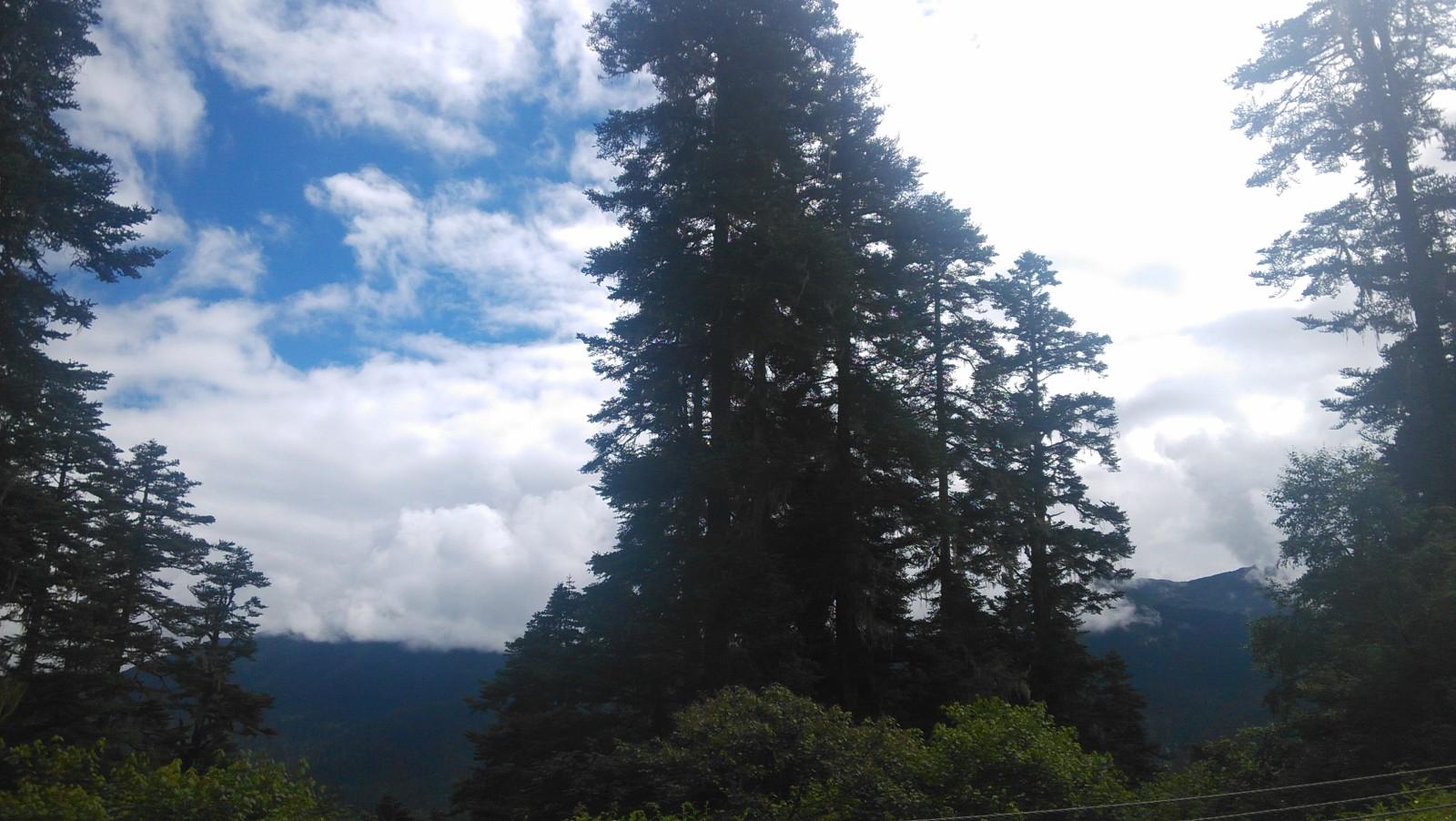 有些年头的树